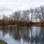 Ribes del Vístula